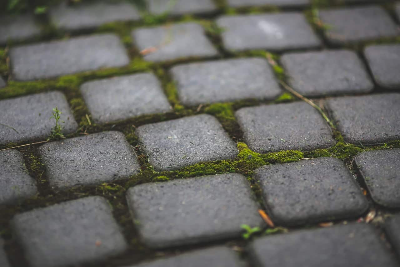 Paving Stones With Moss 6083