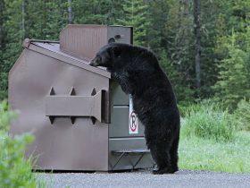Black Bear 1972219 1280